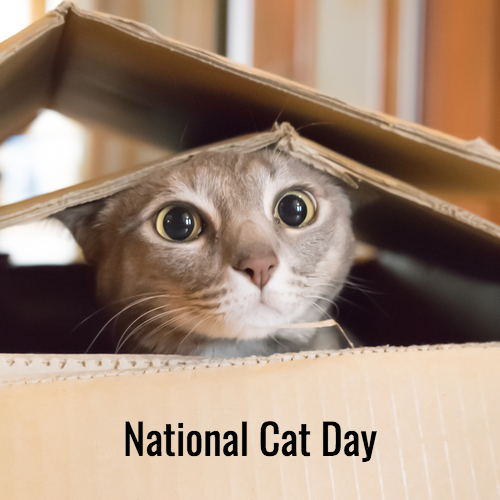 National Cat Day Images